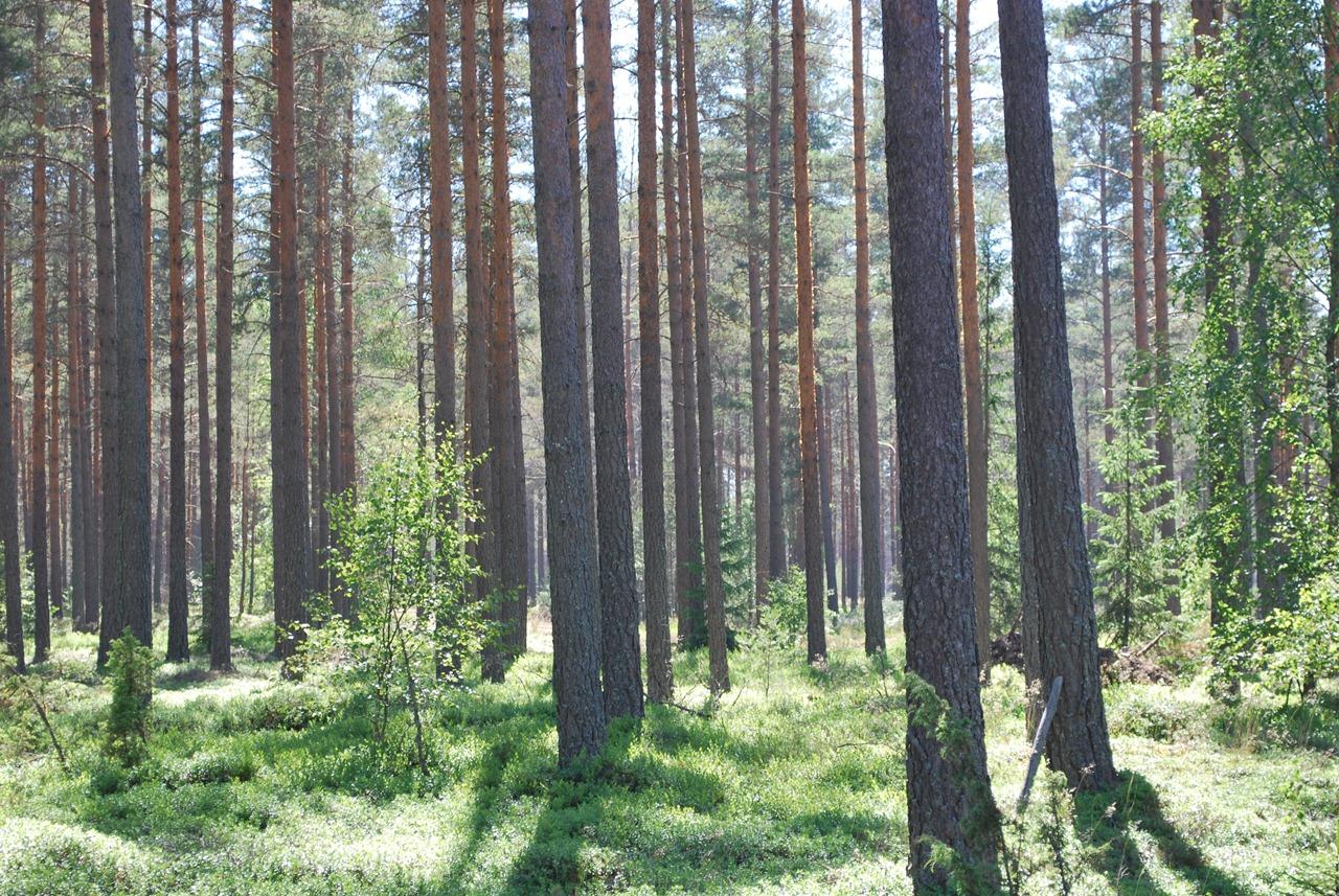 Sommarskog